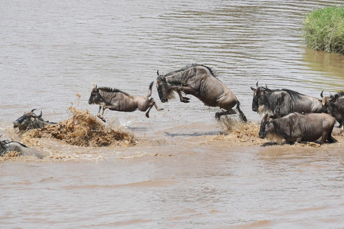 马拉恩根奇野生动物营-马塞马拉Mara Ngenche Safari Camp - Masai Mara (39).jpg